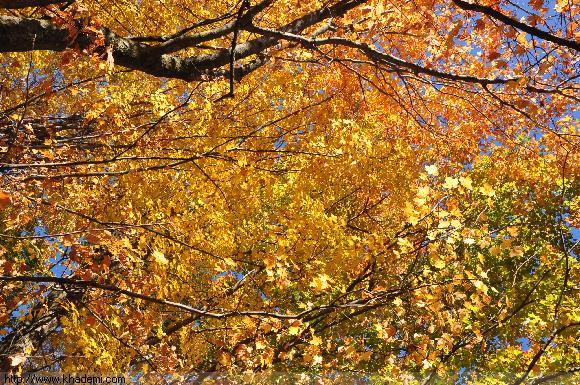 گشت پاییزه 2013