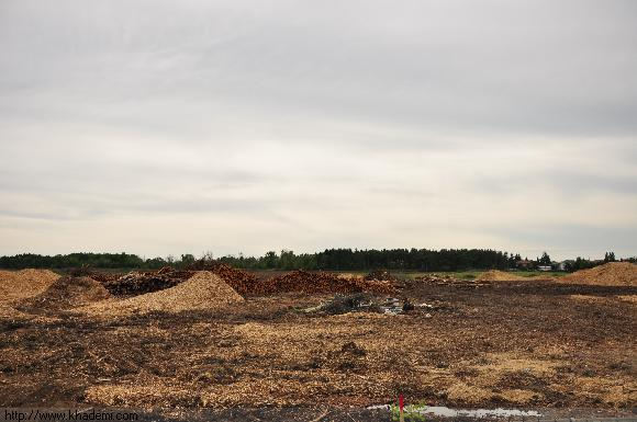 نابودی سریع جنگل ها